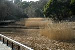 070204四季の森公園葦