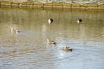 070204四季の森公園池の鳥