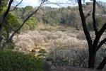 070304薬師池公園(梅林)